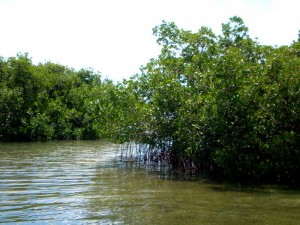Mangrove islands of Key West's backcountry