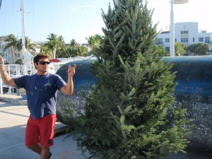 Shon trimming the tree.