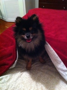 Rascal smiling in bed