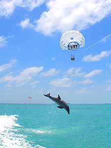 Image of People Parasailing while Dolphin Jumps Underneath
