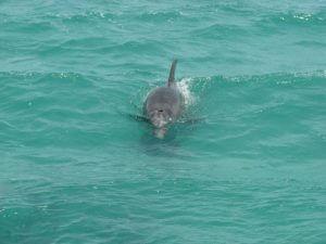 Dolphins! Photo courtesy of Fury Fan Elizabeth Morin