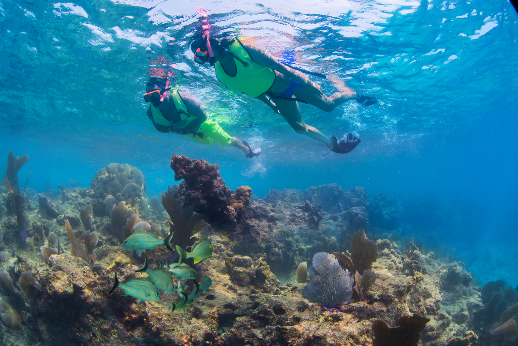 an underwater view of the ocean, the reef and various marine life and above it, a couple swimming with snorkel gear viewing the ocean reef