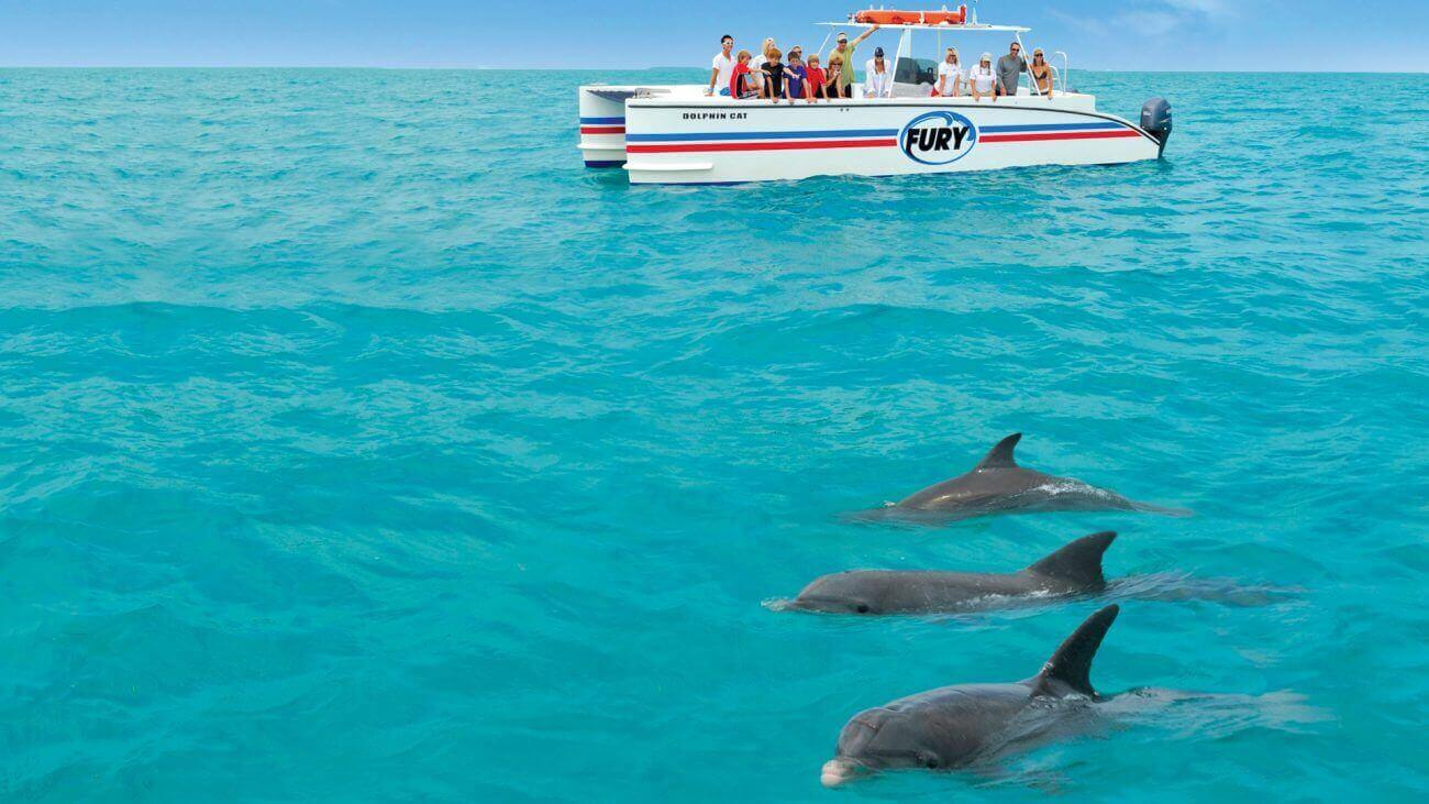 People watching dolphins in Key West