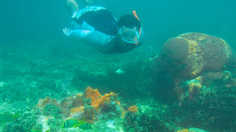 Image of man snorkeling the coral reef in Key West