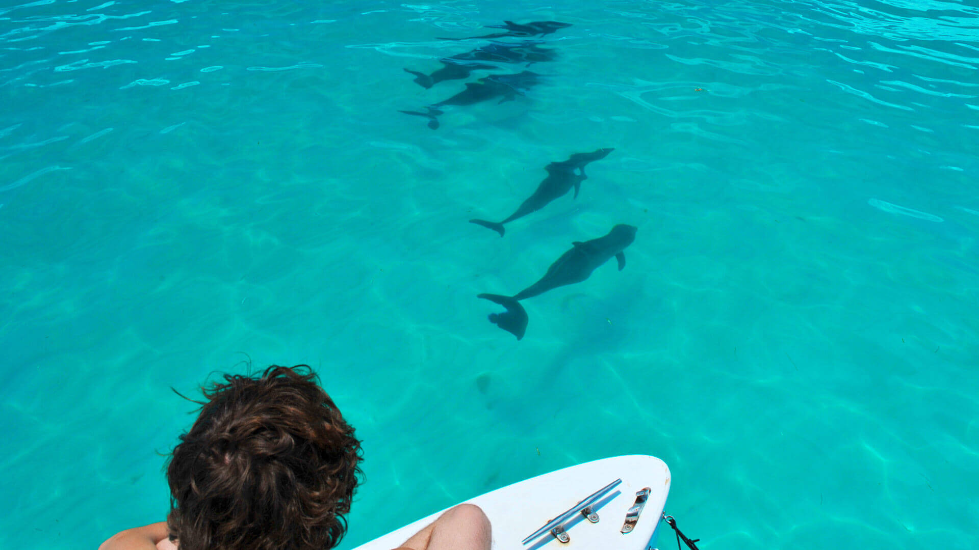 Image of man watching dolphins swim in Key West
