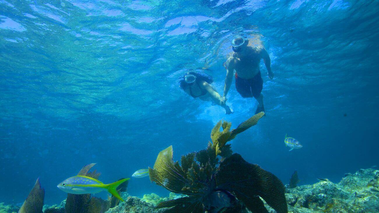 key west snorkeling trips double dip snorkeling adventure