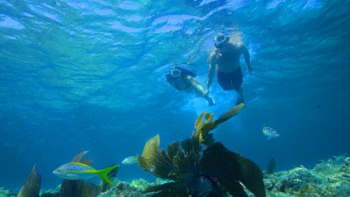 Image of couple snorkeling the reef off Key West