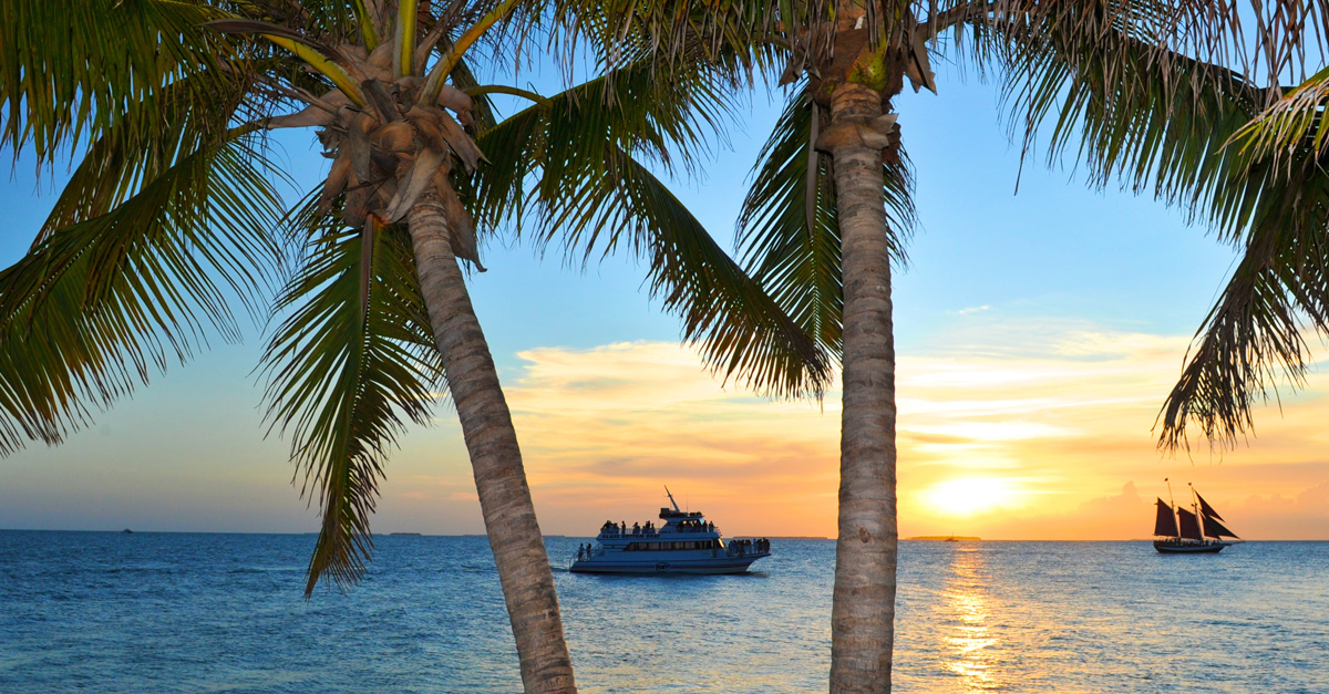 View of a Fury cruise excursion passing through some palm trees