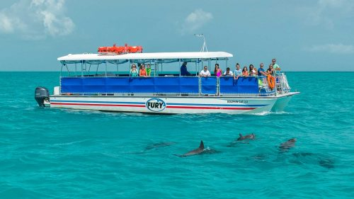 Fury catamaran out in the ocean with guests leaning over railing to view a group of dolphins swimming nearby.