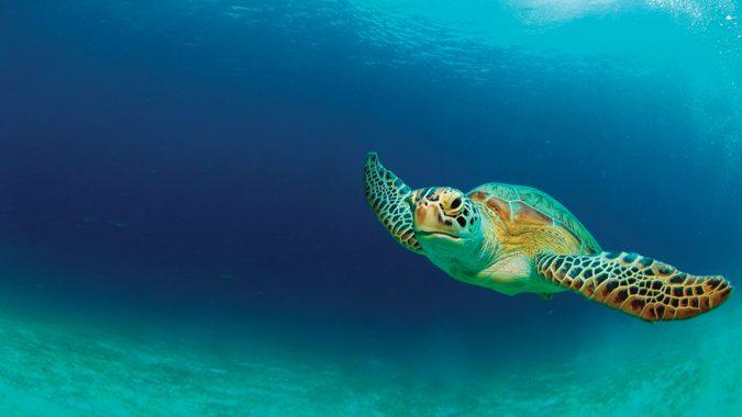 florida sea turtle