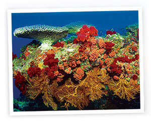 fury-reef-conservation