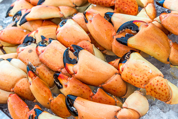 Key West Stone Crab Season