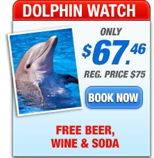 dolphin watch