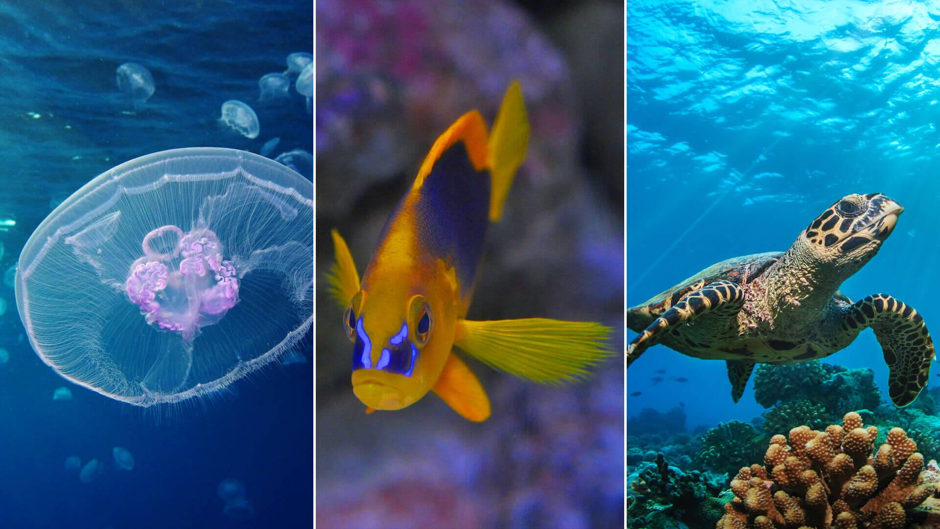 3 types of aquatic animals kids could see at the key west aquarium