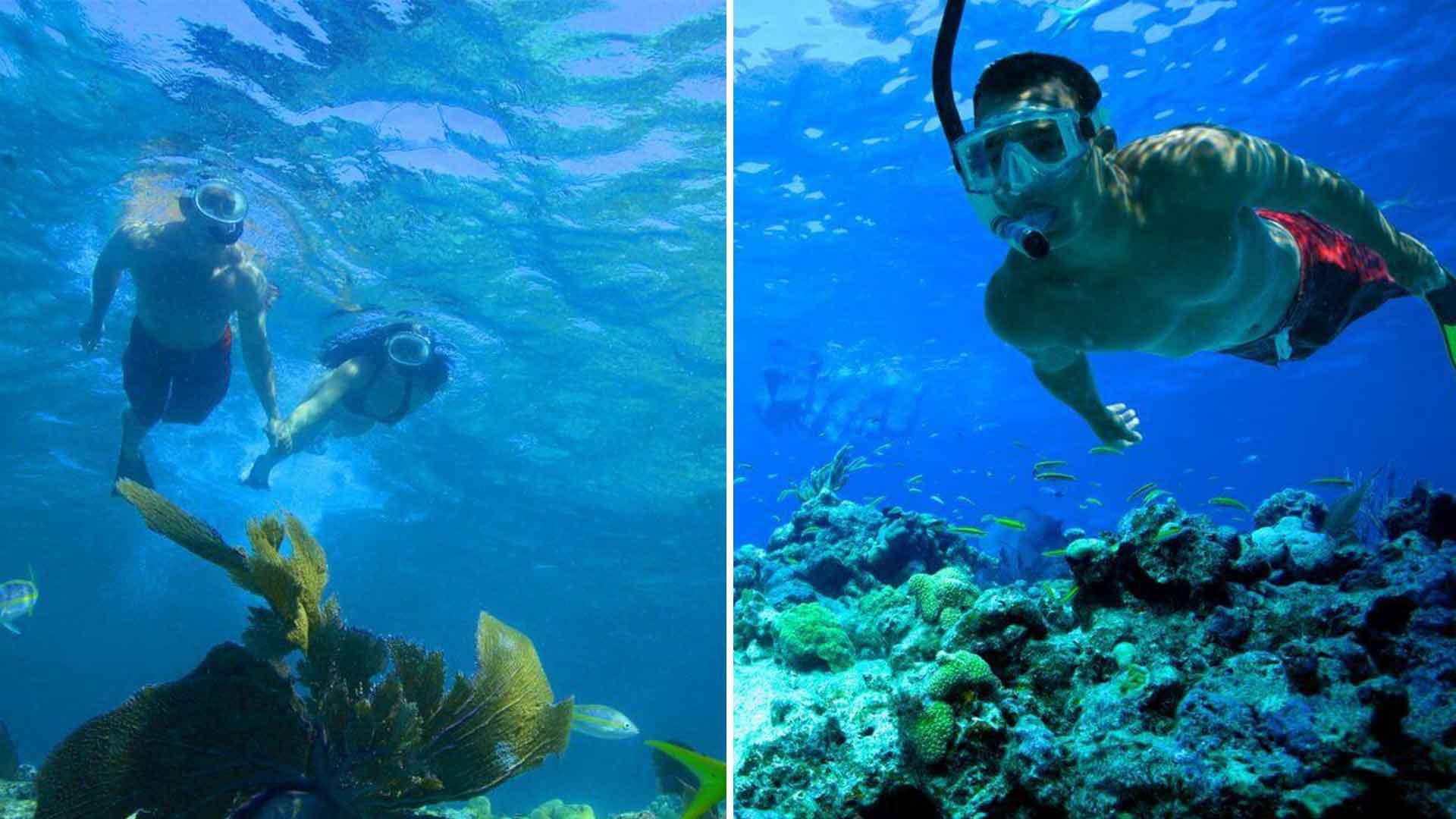 key west coral reef snorkeling trip