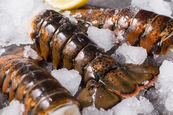mini lobster season
