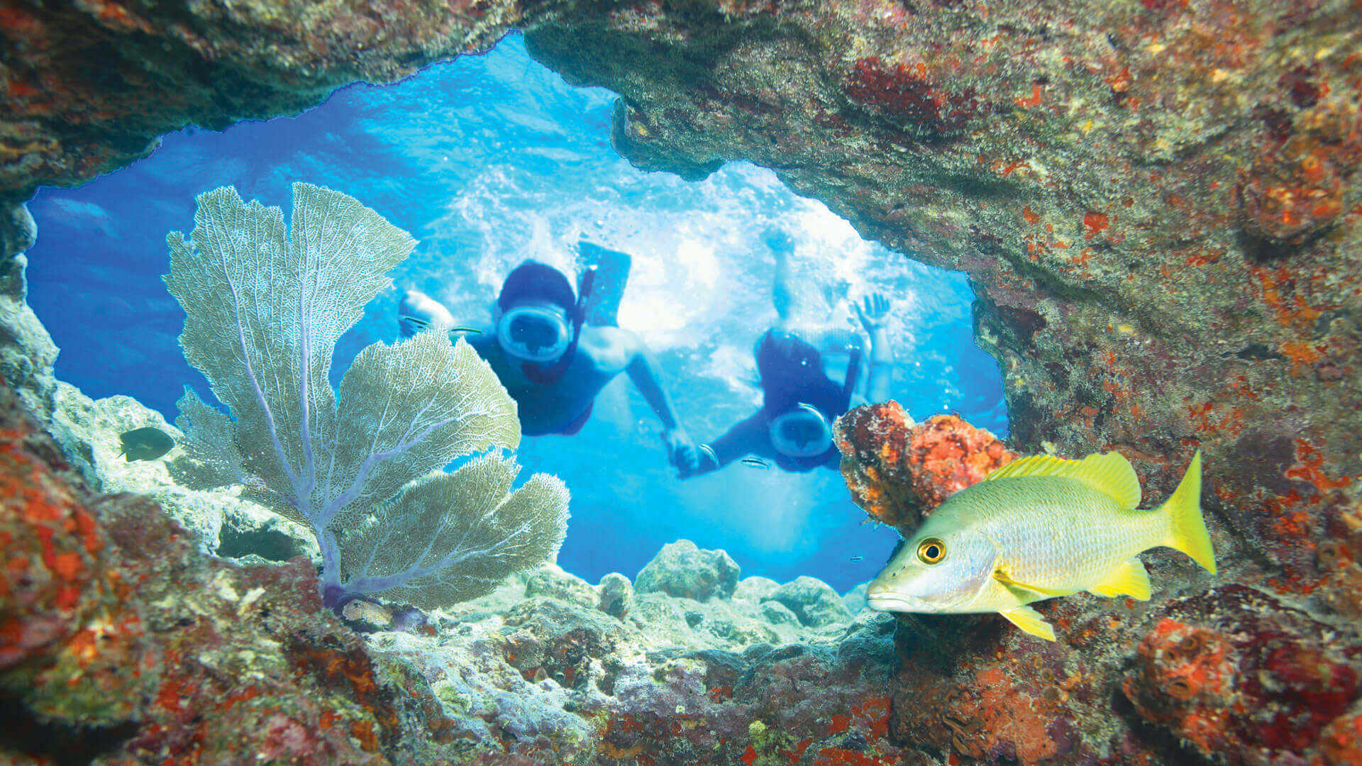 Couple snorkeling the Key West reef